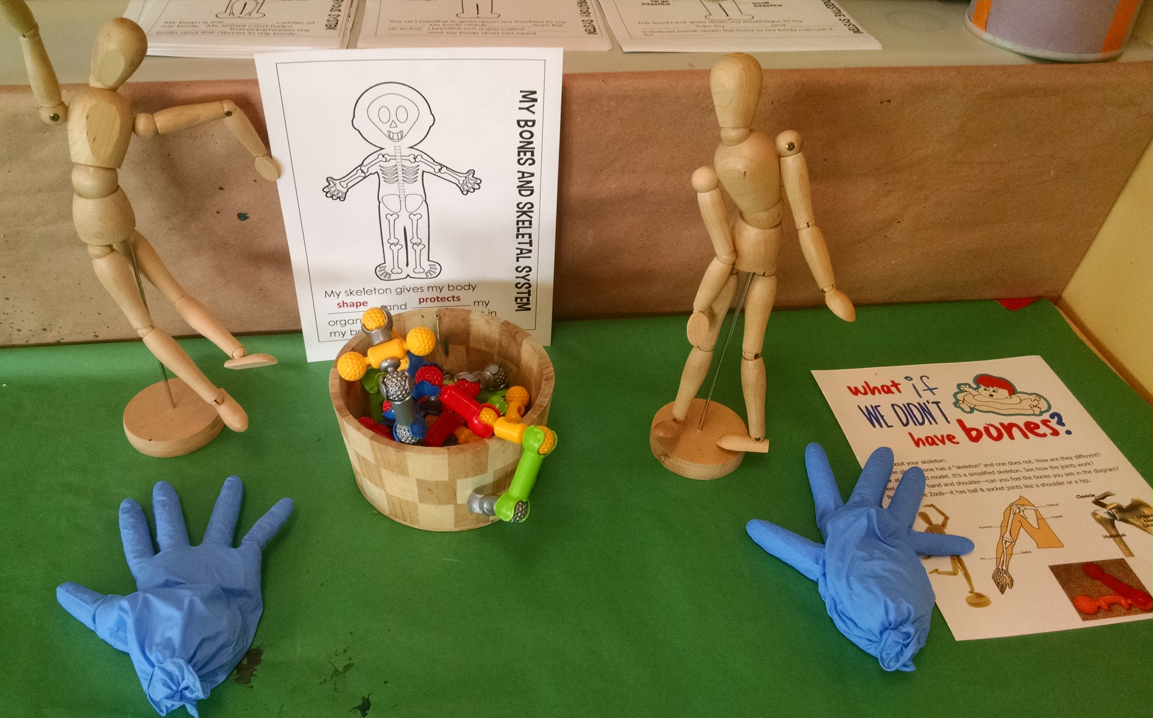 The Human Body Anatomy For Kids Inventors Of Tomorrow Bones Skeleton How They Work Diagrams Skeletal System Science Exploration We Had A