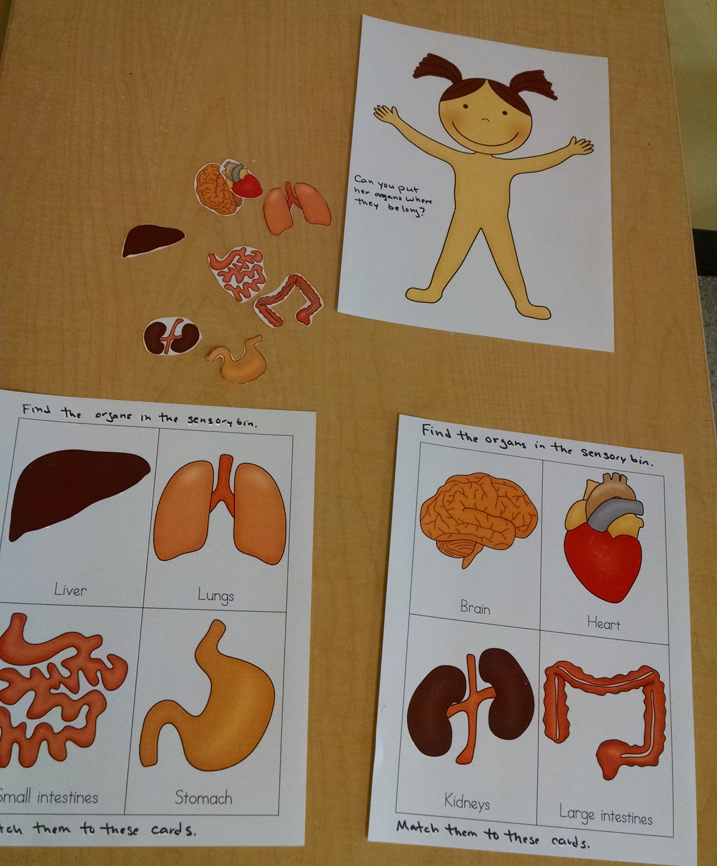 The Human Body – Anatomy for Kids – Inventors of Tomorrow