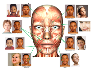 muscles for facial expressions
